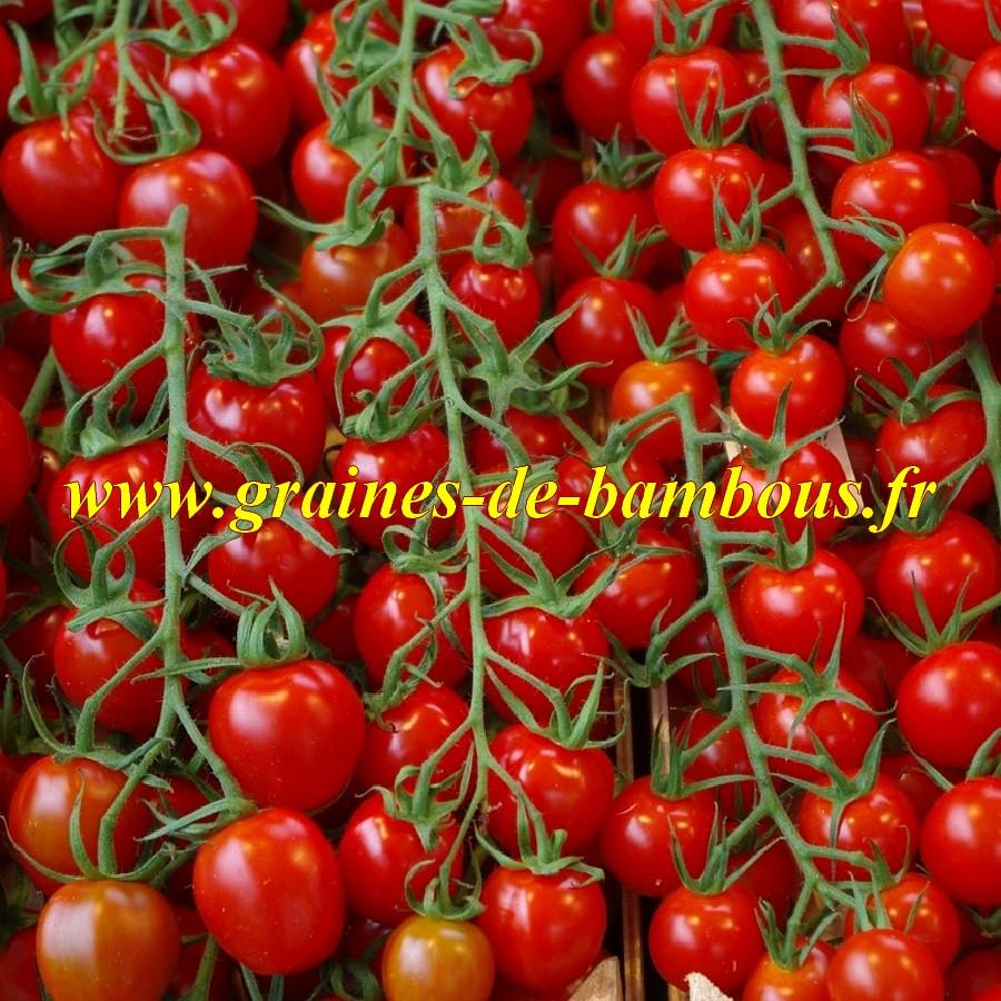 Tomate pokusa graines de bambous fr