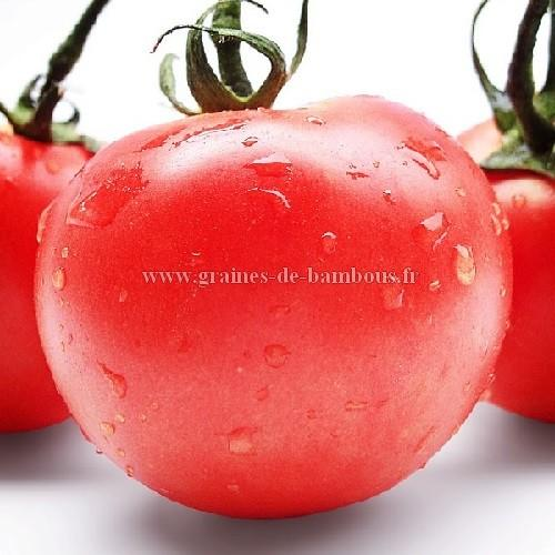 Tomate Pomme rouge réf.785