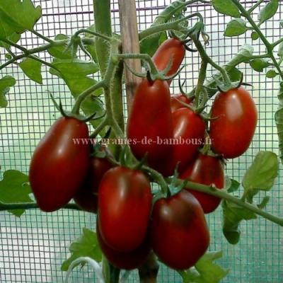 Tomate Prune noire réf.422