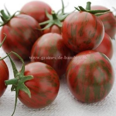 Tomate Artisan purple Bumble bee réf.778