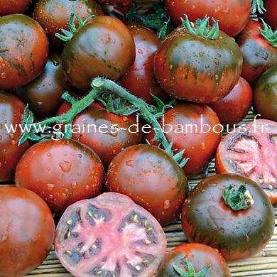 Tomate Rebella Réf.832