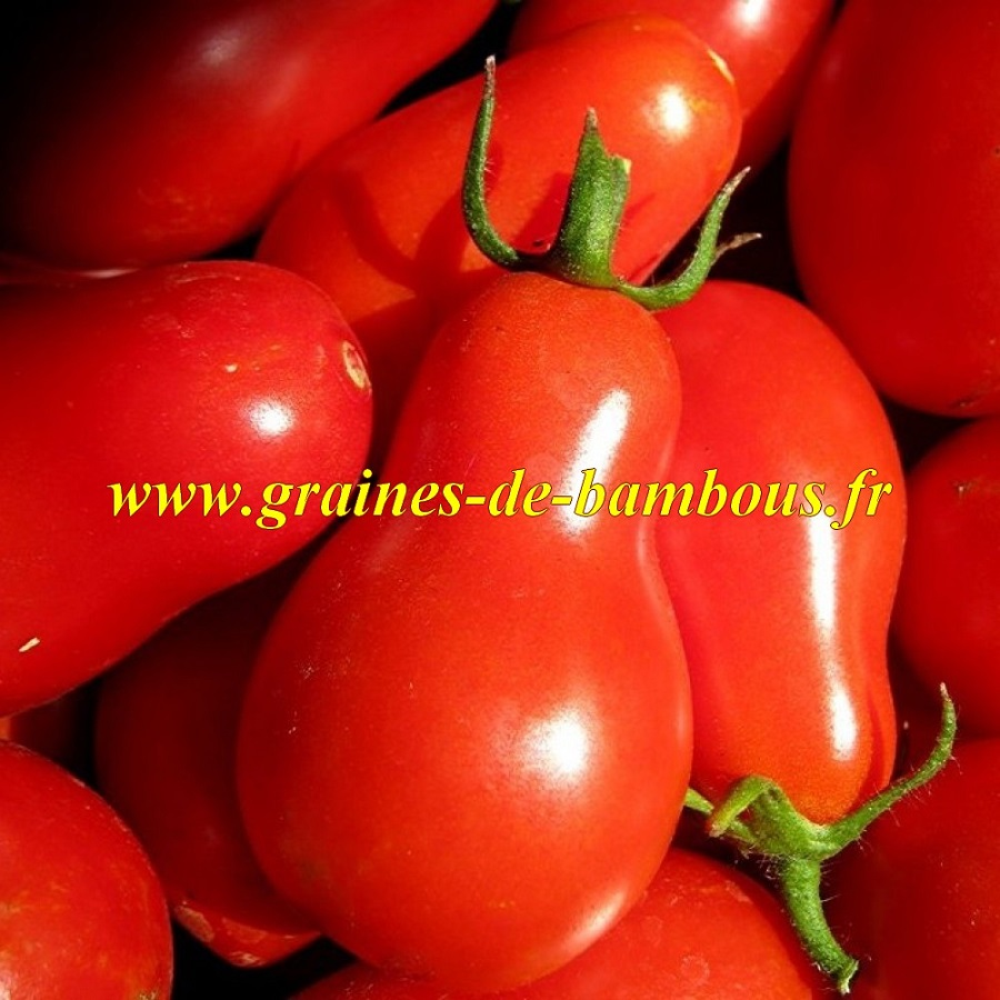 Tomate red cherry graines