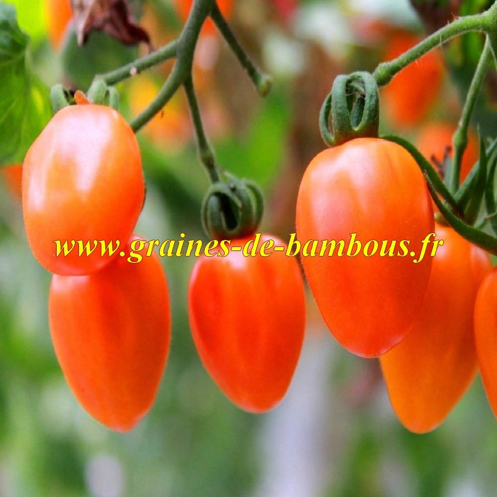 Tomate rio grande graines semis et plant