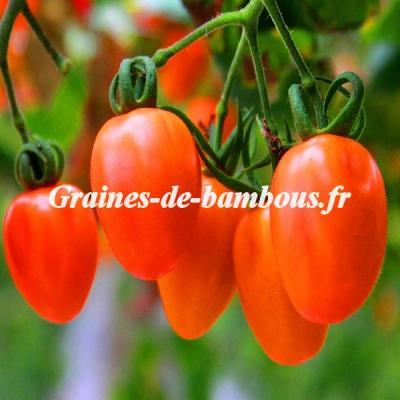 Tomate Rio Grande 1200 graines