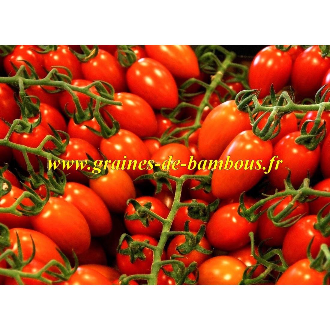 Tomate roma graines de bambous fr