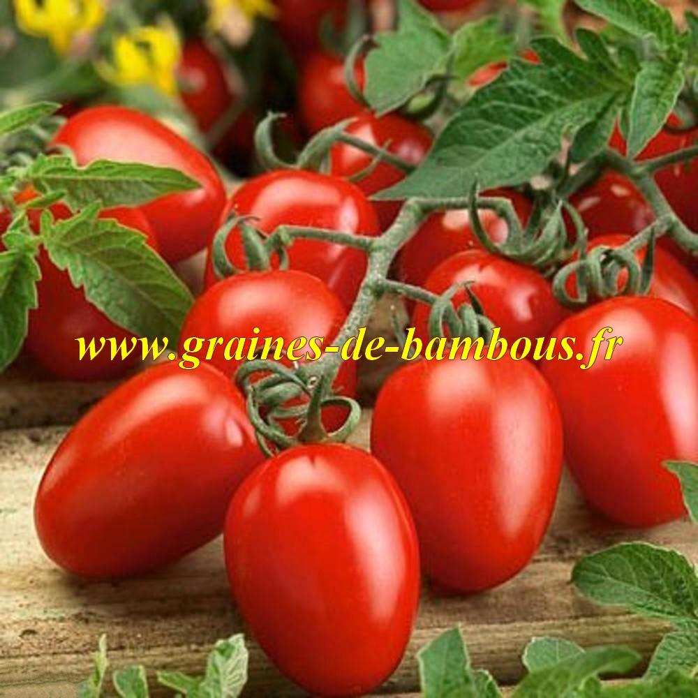 Tomate roma graines solanum esculentum