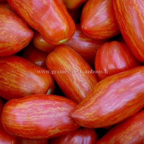 Tomate roma striee graines de bambous fr