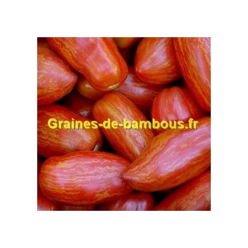 Tomate roma striee sur graines de bambous fr