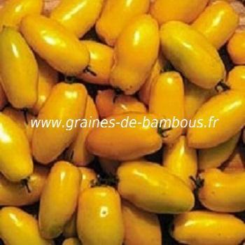Tomate Roman Candle jaune Réf.272