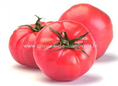 Tomate Rosa réf.833