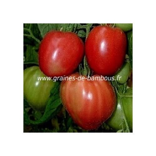Tomate rouge red strawberry lycopersicom esculentum www graines de bambous eu