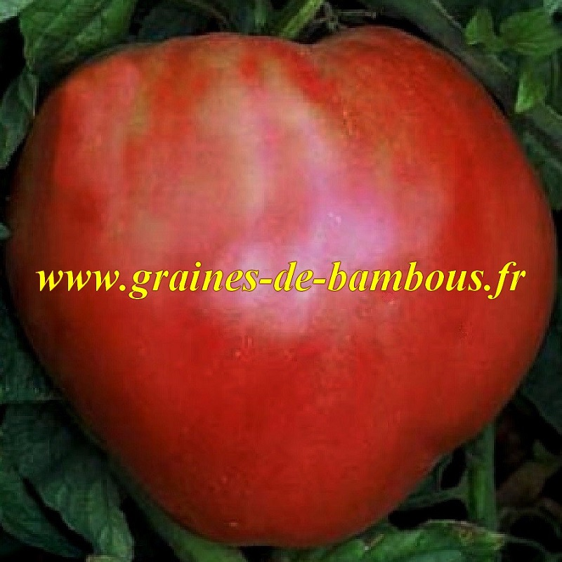 Tomate rouge red strawberry