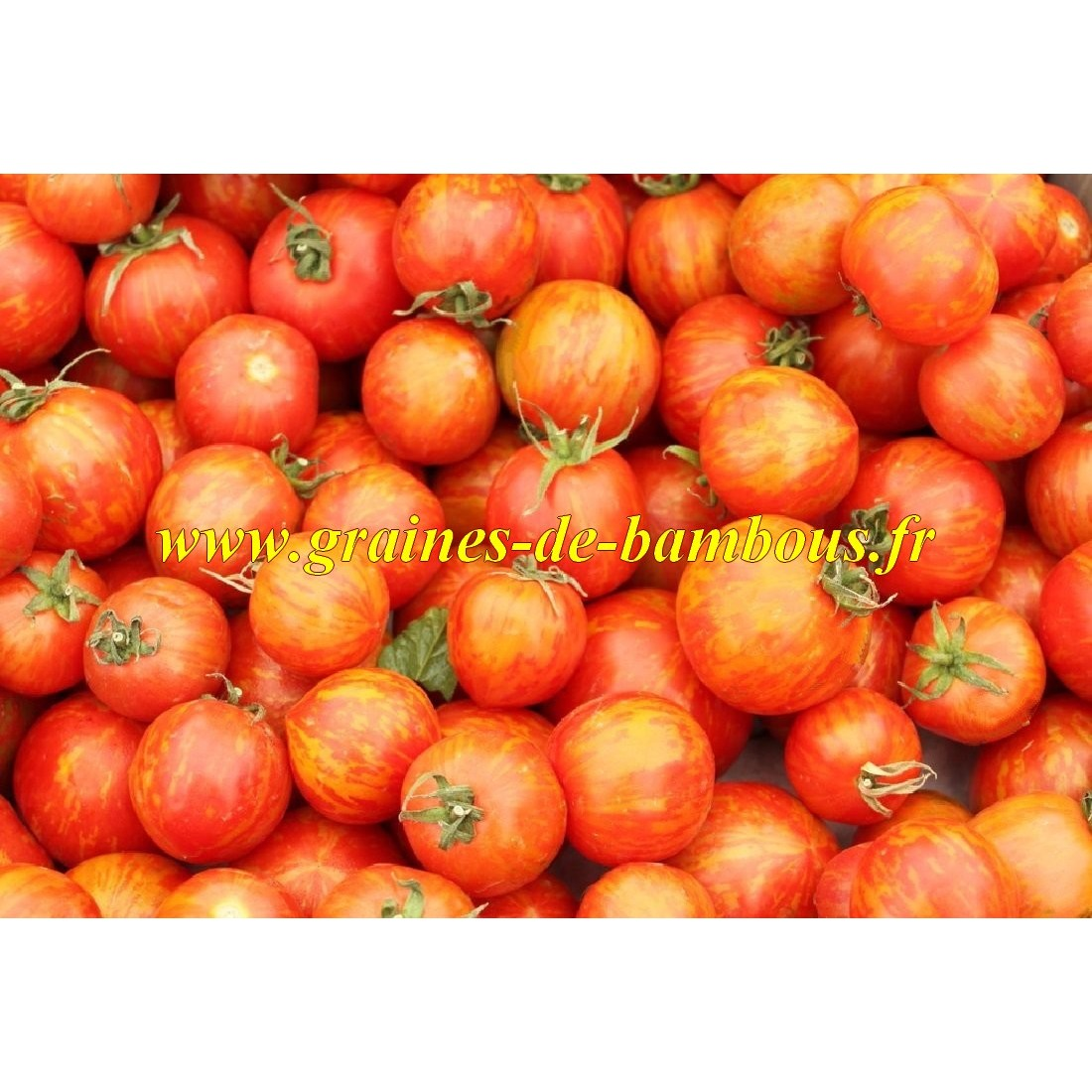 Tomate rouge striee red zebra