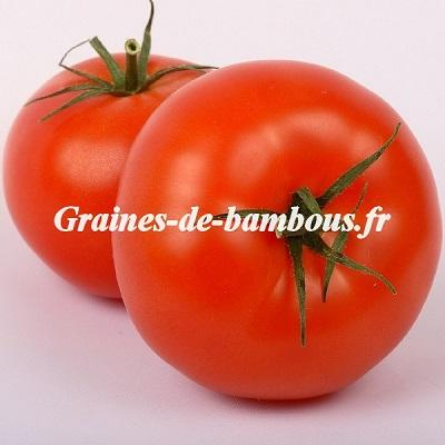 Tomate Saint Pierre 1200 graines