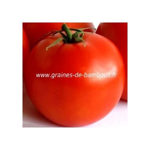 Tomate saint pierre graines de bambous fr 2