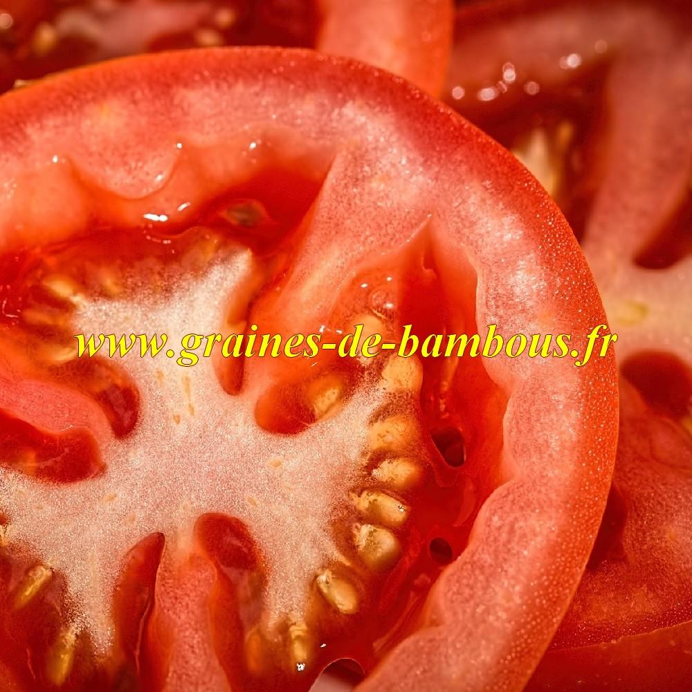 Tomate saint pierre graines lycopersicon esculentum