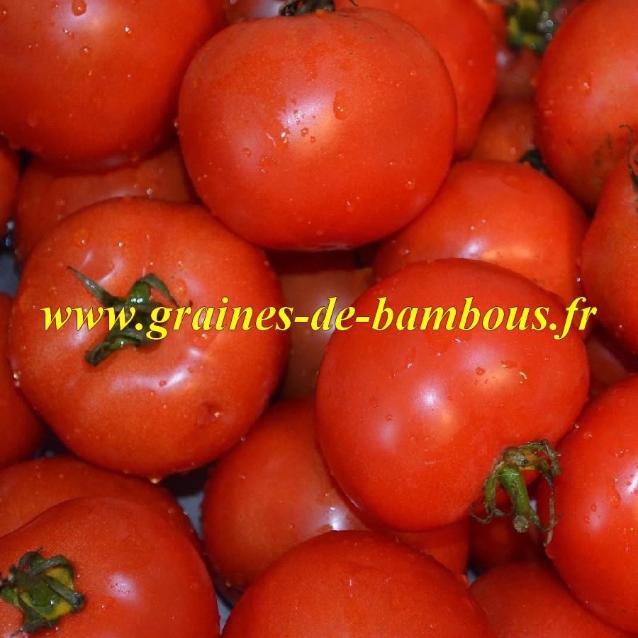 Tomate saint pierre semis et culture