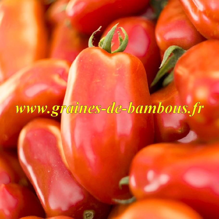 Tomate san marzano 2 graines