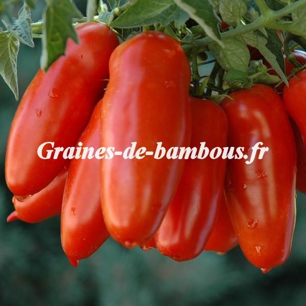 Tomate san marzano grainesdebambous com