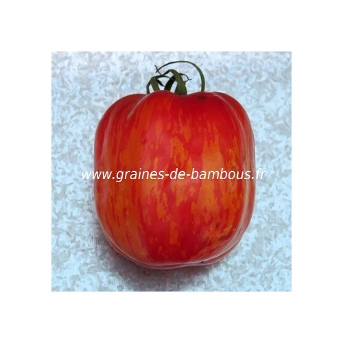 Tomate striped stuffer graines fruit
