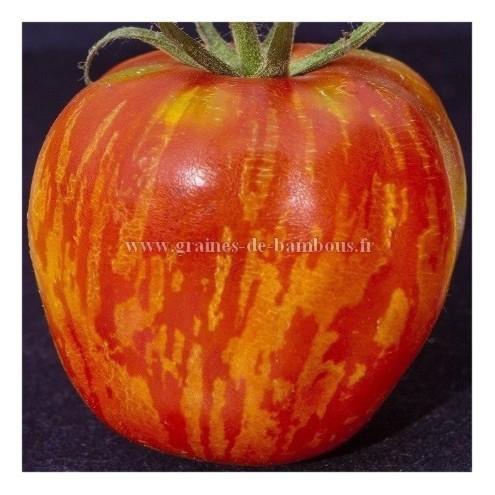 Tomate tigerella semences graines
