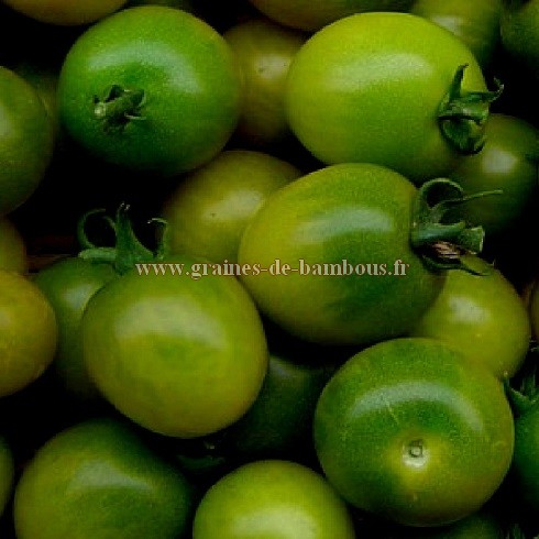 Tomate verte green grape