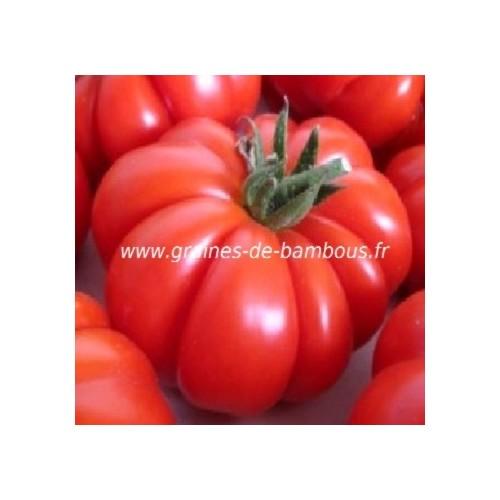 Tomate zapotec graines de bambous eu tomato seeds
