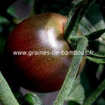 Tomate Cherry black Zebra réf.541