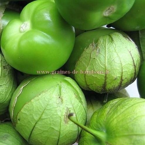 Tomatillo verde graines de bambous fr