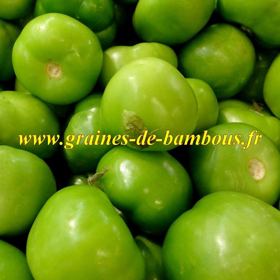 Tomatillo verde graines de tomatille