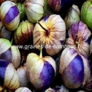 Tomatillo Purple réf.365