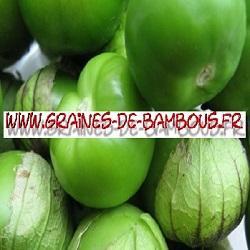 Tomatillo verde 1000 graines