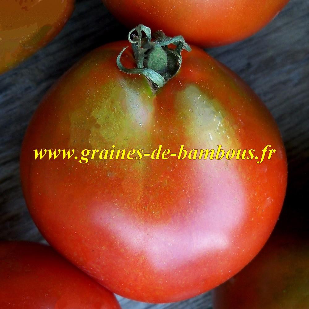 Trifele black graines de tomate