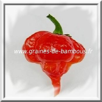 trinidad-scorpion-piment-www-graines-de-bambous-fr-www-grainesdebambous-com.jpg