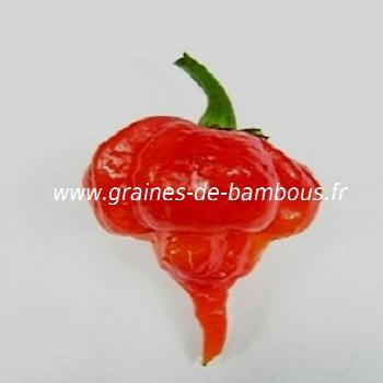 Piment Trinidad Scorpion réf.397